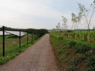 Sandy Moor - screening planted along top of fields